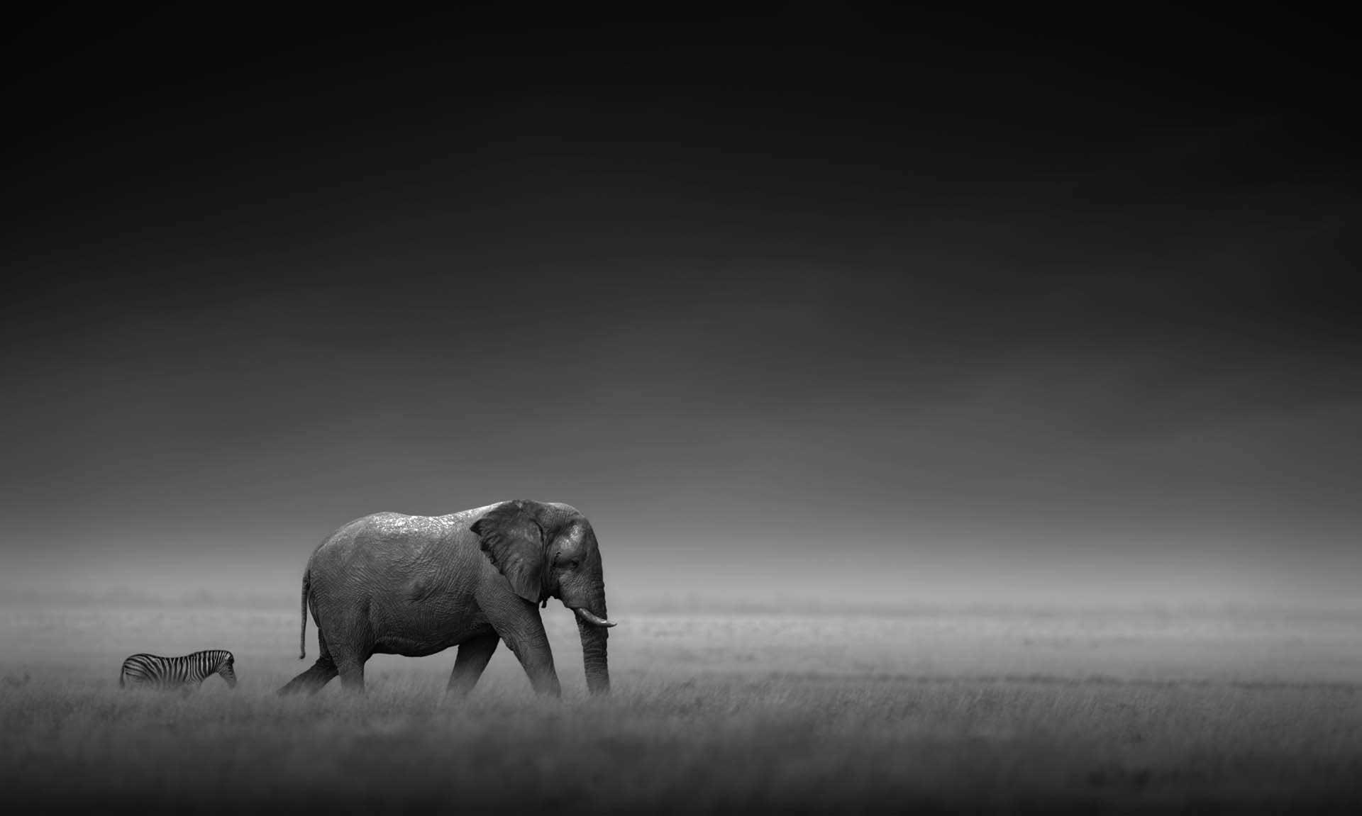 elephant-zebra.jpg