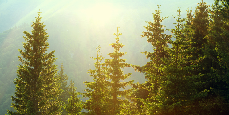 How to master evergreen content for your manufacturing company